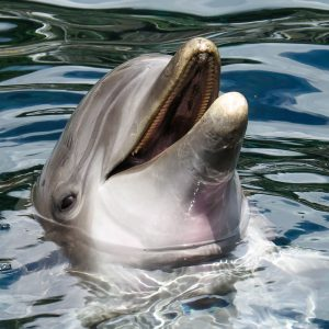Dolphins Communicate Like Humans, Recent Study Finds