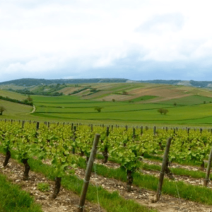 The Global Market for Wine: China Leads the Emergence of a New World Order
