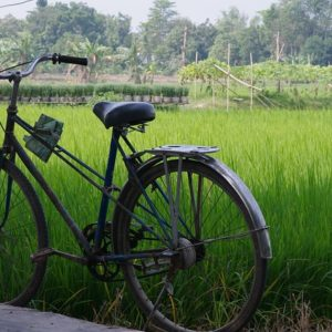 Paddy Fields, Pumpkin Flowers and an Exiled Childhood | Poems